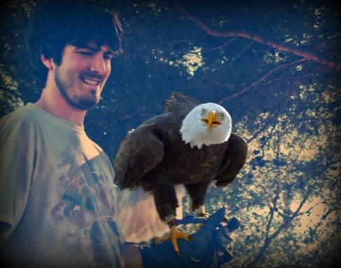 Àguila de cap blanc - Pigargo americà
