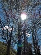 El sol entre els castanyers