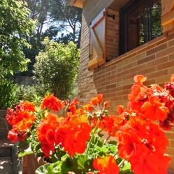 El jardí I
