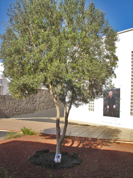 Lanzarote - A Casa José Saramago