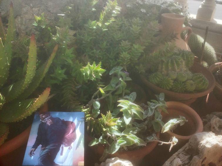 Cactus en Mallorca