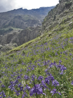 Parque Nacional de Ordesa y Monte Perdido - Pineta