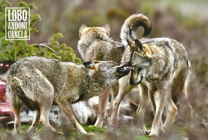 Durmiendo con lobos - Andoni Canela