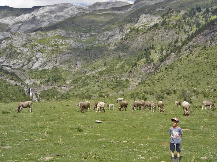 Parque Nacional de Ordesa y Monte Perdido - Vacas en la Larri