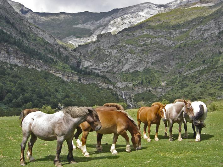 Parque Nacional de Ordesa y Monte Perdido - Llanos de la Larri