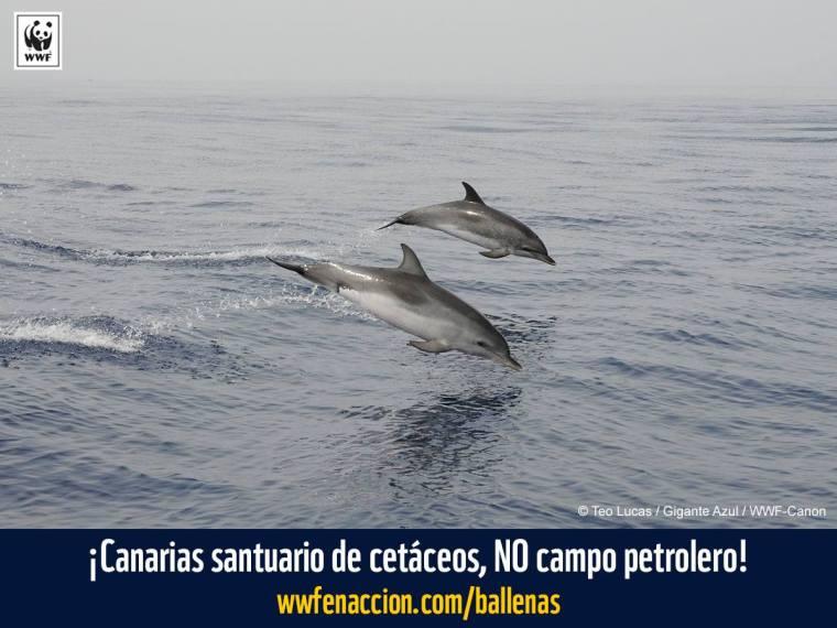 delfines en aguas canarias