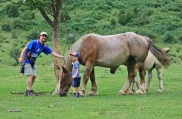 Parque Nacional de Ordesa y Monte Perdido - Caballos en la Larri