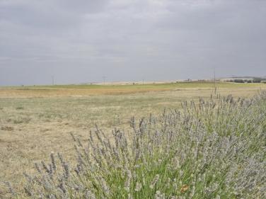 Campos de Castilla - Moratinos